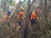 Untuk Tanggapi Status Siaga Darurat Karhutla, Diskes Riau Kirim 800 Kotak Masker ke Dumai