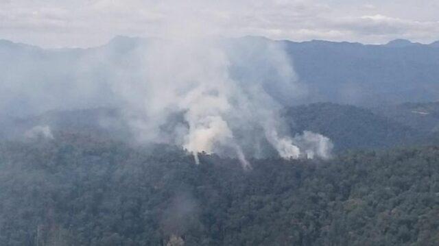 Sejak Januari 1.485 Hektare Lahan di Riau Terbakar , Hingga Hutan Lindung Di Bengkalis Juga Ikut Terbakar